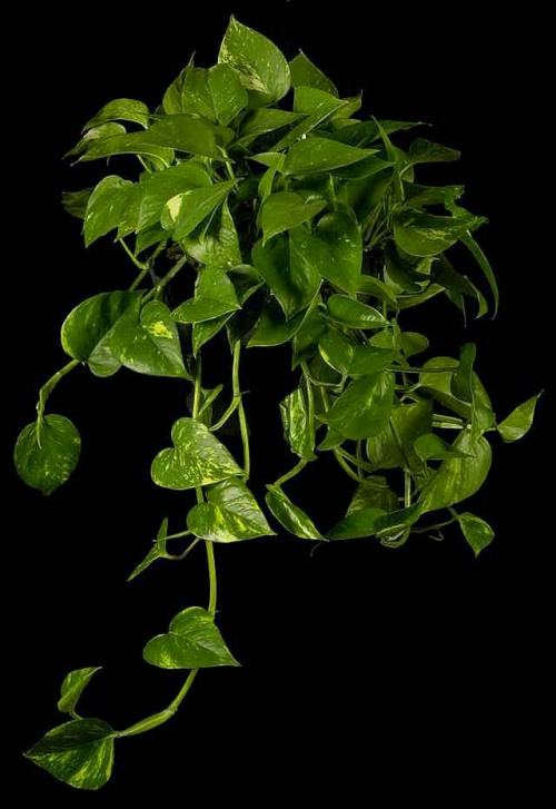 plantas comunes que sanan el espacio vital red